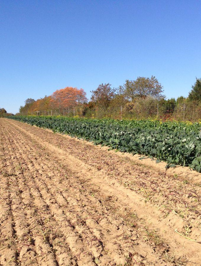 CSA Farm Share
